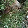 写真: 剪定枝を撒いた庭2