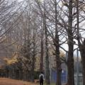 Photos: 晩秋の香り
