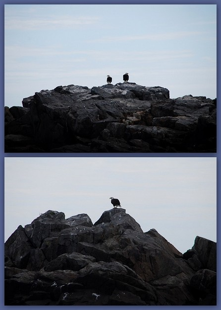 Eagles on the Duck Rock 8-22-14