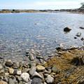 写真: Rachel Carson Salt Pond Preserve 8-22-14