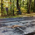 Autumn on the Picnic Table 10-05-14
