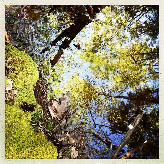 写真: In the Woods I 5-31-14