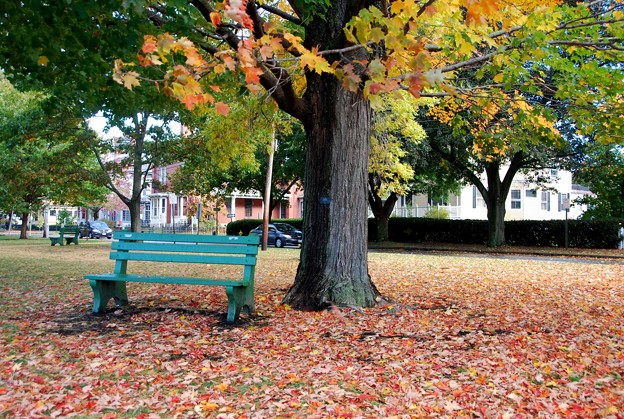 Sugar Maple and the Bench 10-17-15