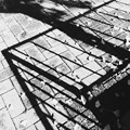写真: Fallen Ginkgo III 10-17-15
