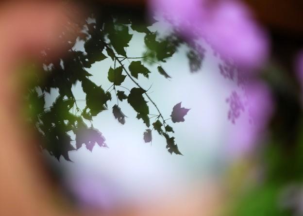 Into Autumn 9-20-15