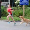 Running Dog 8-22-15