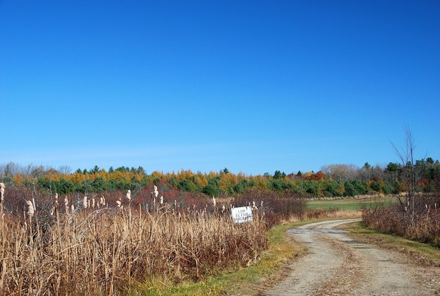 Photos: Tamaracks by the Field 10-31-15