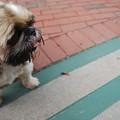 Photos: On the Sidewalk 8-22-15