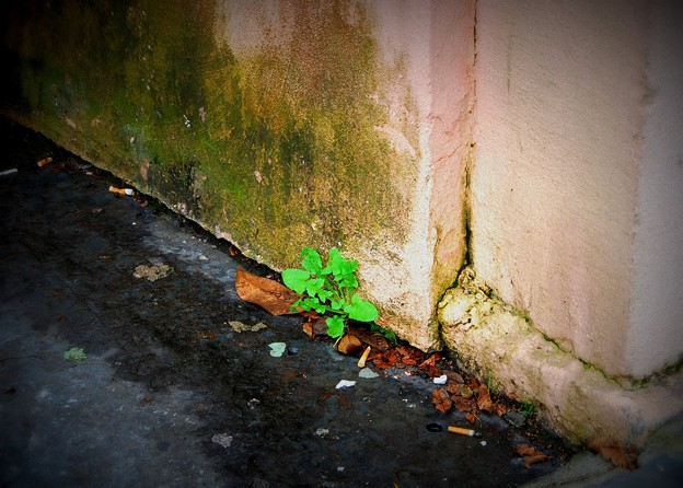The Green by the Wall 12-27-15