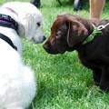 Photos: Puppies1 8-22-15
