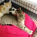 Three Kittens 10-24-15