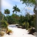 写真: Succulent Garden 3-18-16
