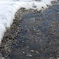写真: Melting Snow 4-2-11