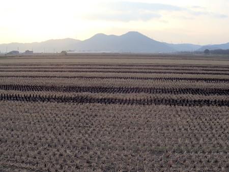 師走の朝の田園風景