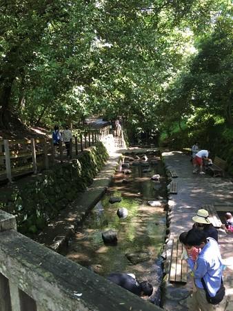 子供たちの水遊び場所です(いいね!気持ち良さそう!おばちゃんも混ぜて~)