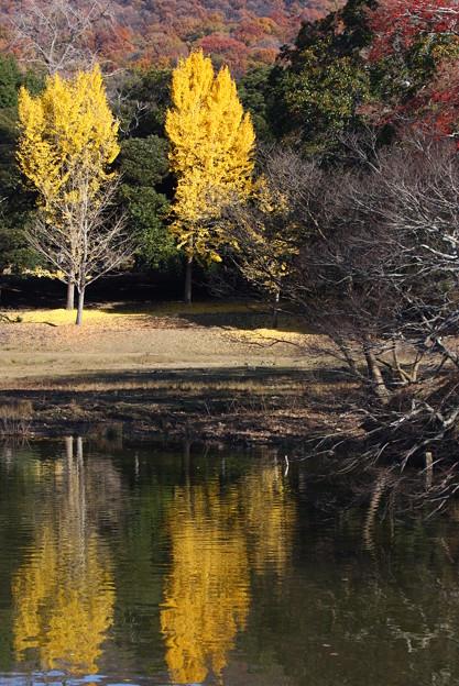 奈良公園 大仏池