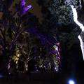 写真: 木々のイルミネーション7