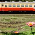 Photos: 花いちりん