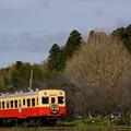 イルミネーション列車