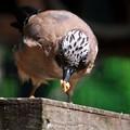 Photos: グルメ鳥
