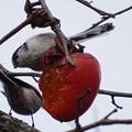 みんな熟した柿の実が好き・・・