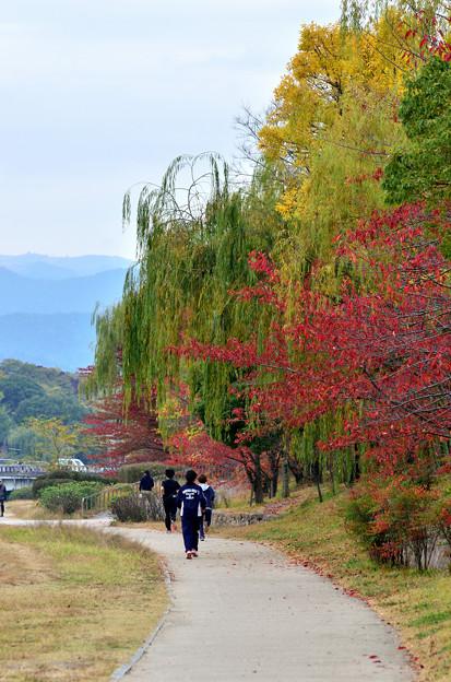 2015_1107_110924_京都鴨川河川敷