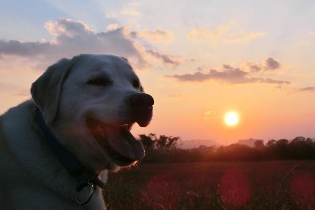 夕日とふう太