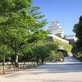 Photos: 青空、新緑、白亜の天守閣2