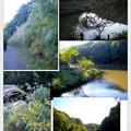 写真: 四季の森公園