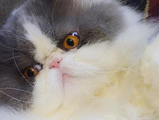 写真: 猫じゃらしに夢中