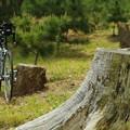 写真: 切り株と自転車
