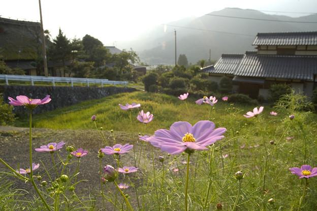 コスモスヒストリア 2008 京都 三千院。