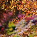萌ゆる秋。