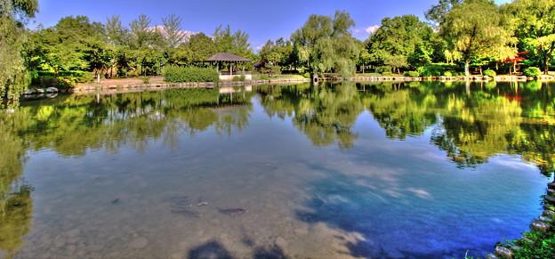 チューリップ公園 >>: 鯉およぐ池 IMG_0177