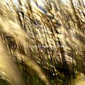 写真: 秋 揺れる