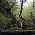 天川村の原生林