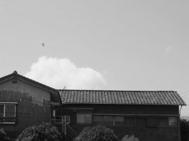Photos: 川崎