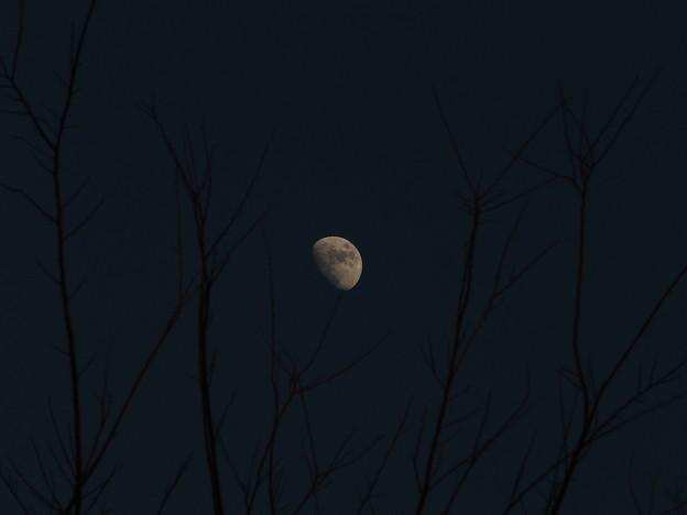 写真: 風の丘の公園からの月