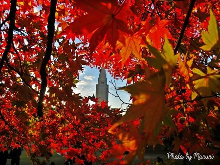 紅葉に囲まれるタワー