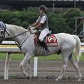 写真: 船橋競馬場 誘導馬_2(14/07/21)