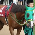 Photos: ヌーヴォレコルト パドック(第61回 産経賞オールカマー)
