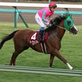 Photos: ヌーヴォレコルト 返し馬(第61回 産経賞オールカマー)