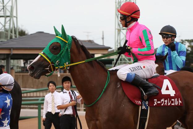 ヌーヴォレコルト レース後(第61回 産経賞オールカマー)