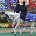 写真: 東京競馬場 誘導馬_5(15/10/17)