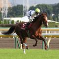 写真: ゴールデンナンバー 返し馬(第63回 府中牝馬ステークス)