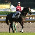 写真: ストリートキャップ 返し馬(15/10/25・12R)