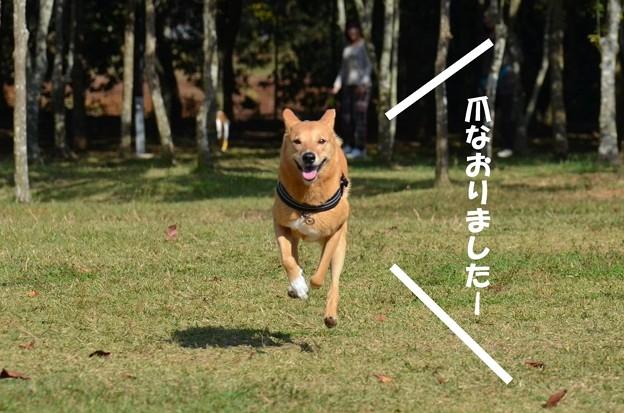 写真: 20141019_133657