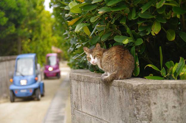 s1690_塀の上の猫