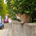 Photos: s1690_塀の上の猫