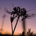 Photos: 秋の陽は暮れて